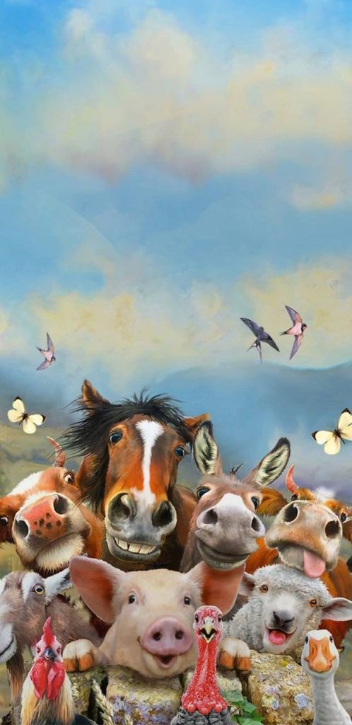 Wallpaper Background Animal-Animals-Chicken-Cow-Cute-Donkey-Funny-Horse-Pig-Sheep