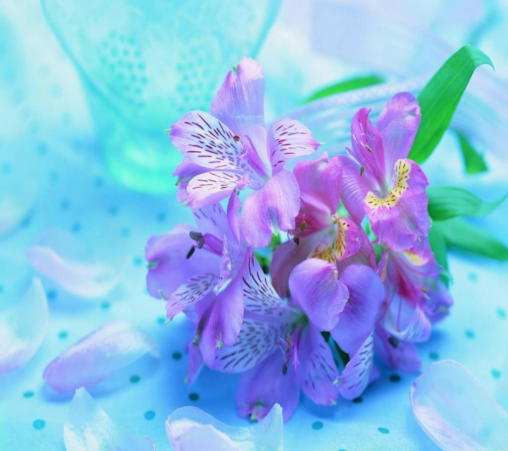 Calm-Cool-Flowers-Green-Nature-Pink-White Wallpaper Background