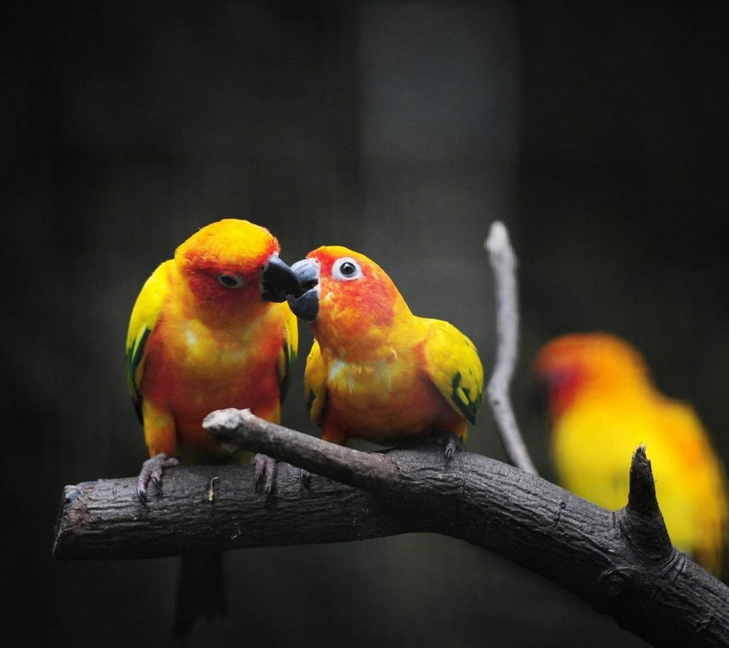 Birds-Couple-Forever-Heart-Hug-Kiss-Love-Love-Birds-Romance Wallpaper Background